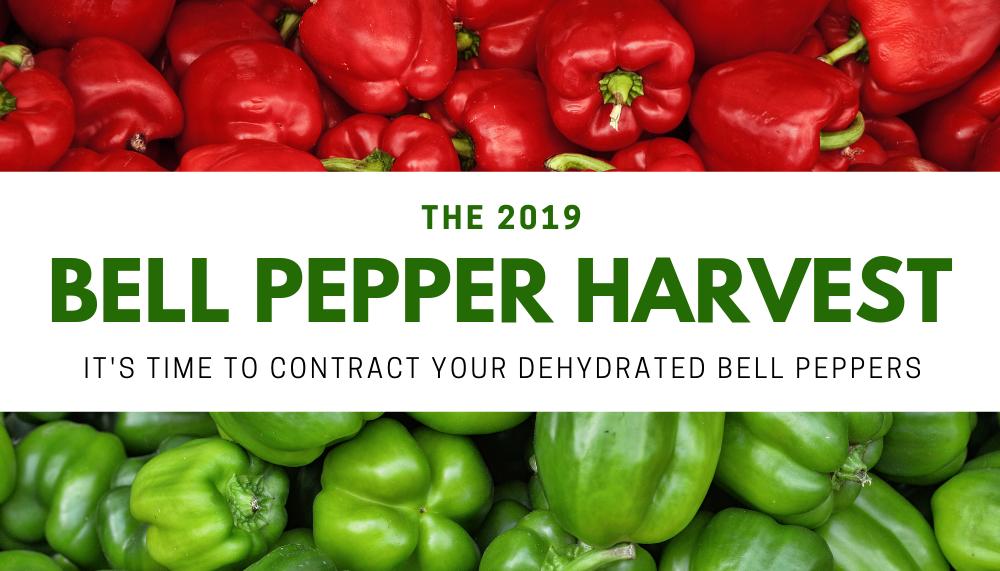 2019 Bell Pepper Harvest